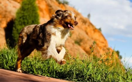 كلاب (3)