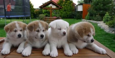 كلاب (4)