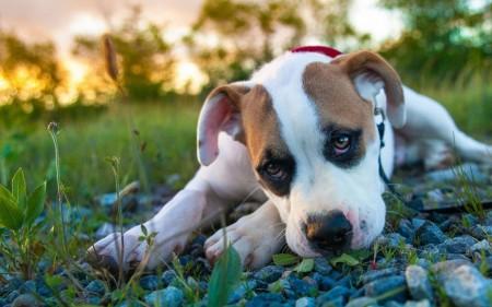 كلب (1)