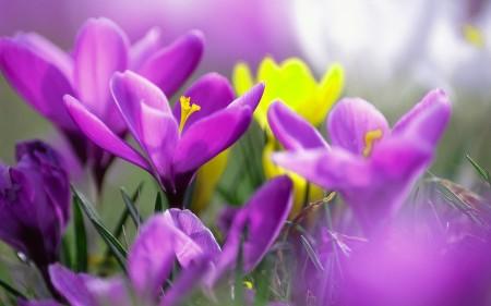 ورود بألوان جميلة (4)