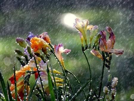 احلي صور المطر (1)