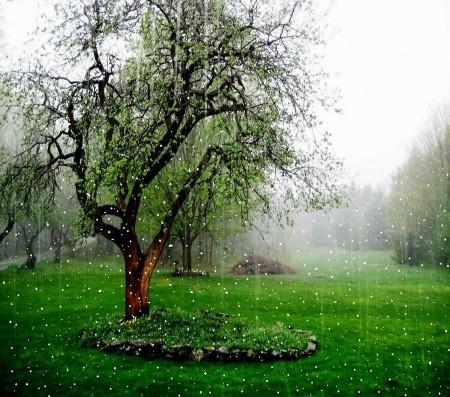 امطار جميلة (1)