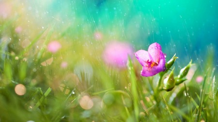 صور امطار علي زهور (2)