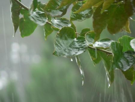 صور مطر (4)