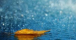 rain photos (4)