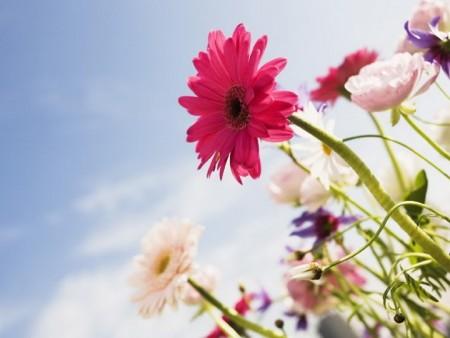 أجمل زهور (4)