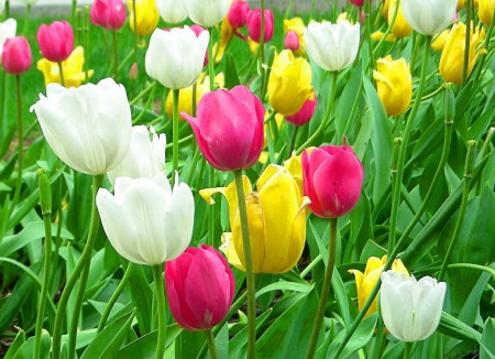 أجمل زهور (5)
