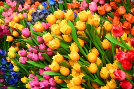 أجمل زهور (6)