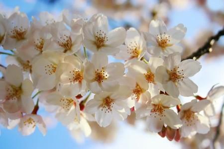 باقات زهور (5)