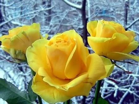خلفيات زهور (1)