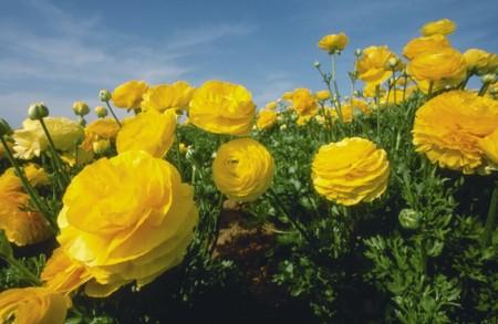 خلفيات زهور (6)
