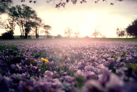 زهور الربيع (1)