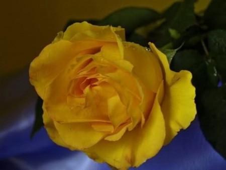 زهور الربيع (2)