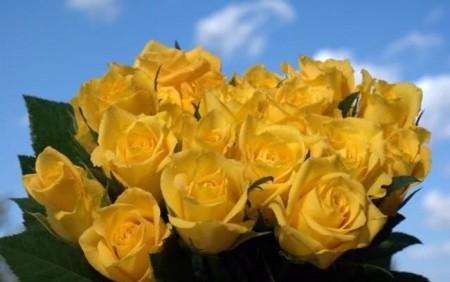 زهور الربيع (4)