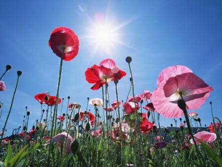 زهور الربيع (5)