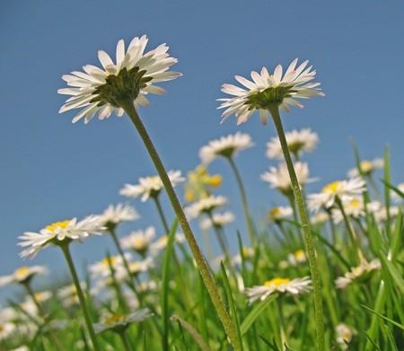 زهور الربيع (6)
