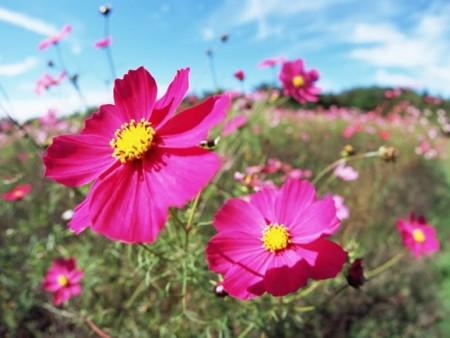 زهور بالصور (3)