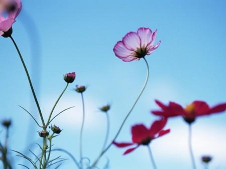 زهور بالصور (5)