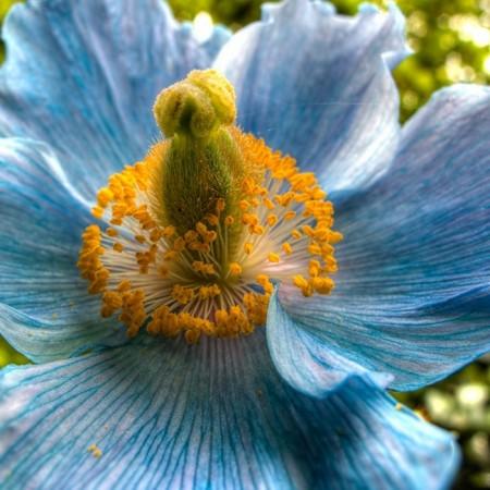 زهور بالصور (7)