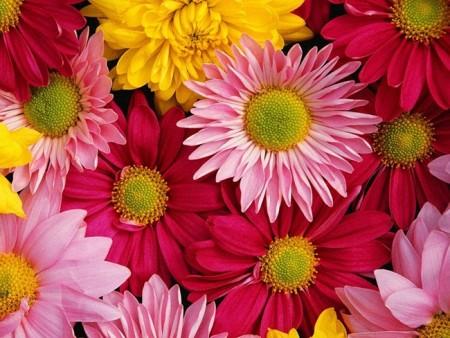 زهور باللون الاحمر والوردي (2)