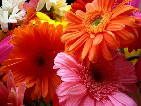 زهور باللون الاحمر والوردي (3)