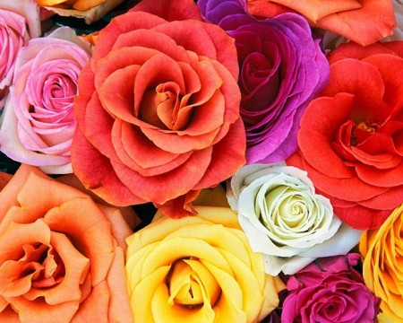 زهور باللون الاحمر والوردي (4)
