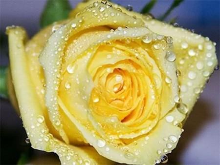 زهور باللون الاصفر (10)