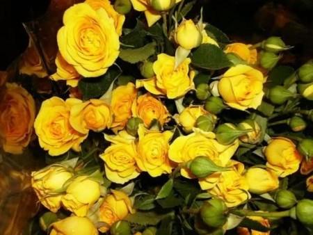 زهور باللون الاصفر (11)