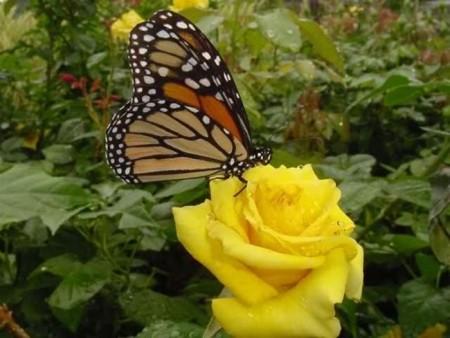 زهور باللون الاصفر (3)