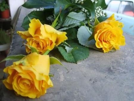 زهور باللون الاصفر (5)