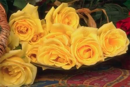 زهور باللون الاصفر (6)