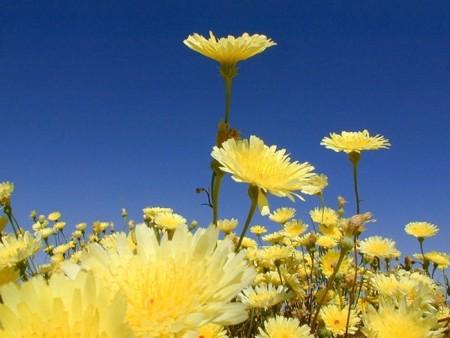 زهور جميلة (2)