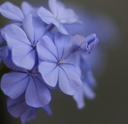 زهور جميلة (6)