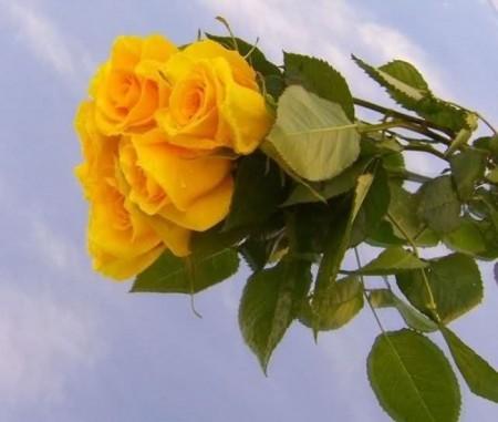 زهور طبيعية (2)