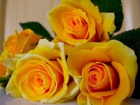 زهور وورود (3)