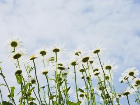 زهور (10)