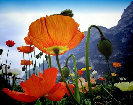 زهور (5)