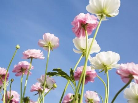 زهور (7)