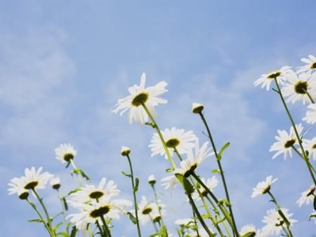 زهور (8)