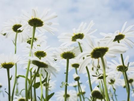 زهور (9)