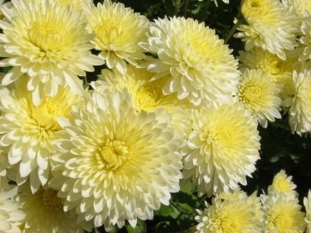 صور زهور جميلة (1)
