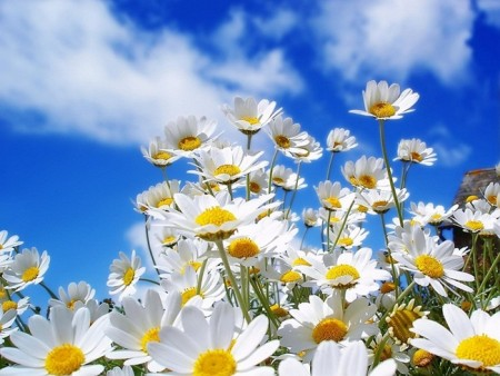 صور زهور جميلة (2)