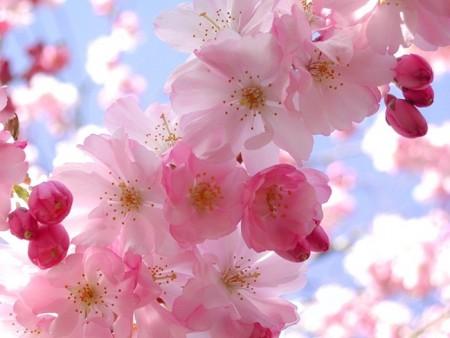 صور زهور جميلة (3)