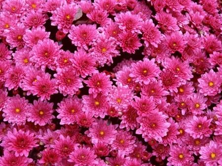 صور زهور جميلة (5)