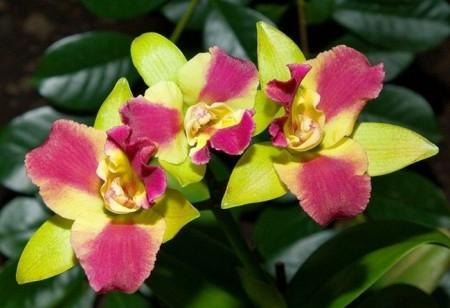 صور زهور جميلة (7)