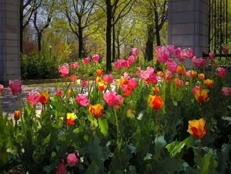 صور زهور جميلة (8)