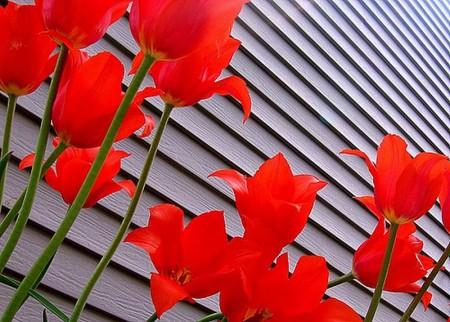 صور زهور (1)