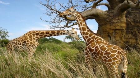 أجمل صور حيوانات (4)