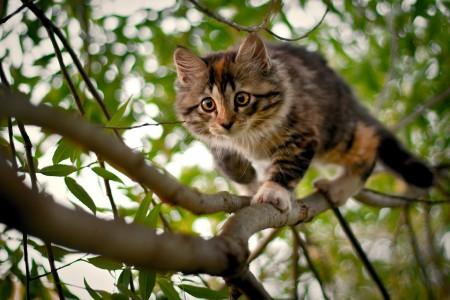 أجمل صور قطط (2)