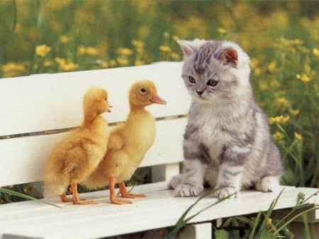 أجمل صور قطط (3)